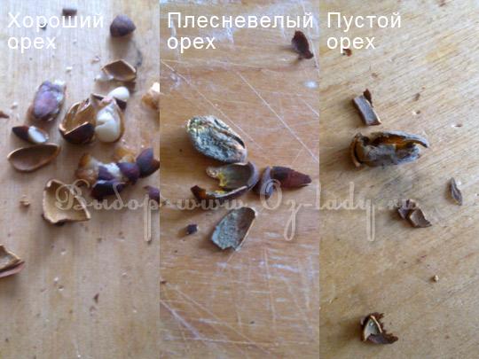 кедровые орехи - рецепты, статьи на